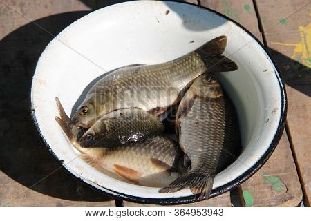Successful Fishing. Caught Crucians In Plate. Natural Ingredients For Healthy Nutrition. Fresh Fish