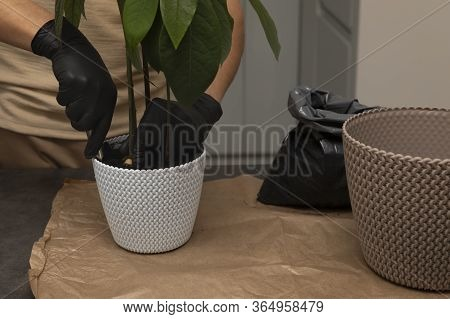 Man's Hands Transplanting Plant A Into A New Pot.
