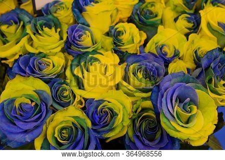 Texture Two-tone Yellow-blue Rose Buds Tightly Folded, A Large Number, Background, Flag Of Ukraine