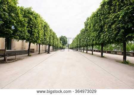 Alley with Green Trees in Tuileries garden in Paris, France.