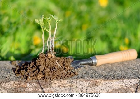 The Work Of The Farmer In The Infield. Blurr Bokeh Background. Planting Vegetables.young Seedling. W