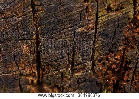 Natural Wooden Cut Off Texture Background. Closeup Macro Of Old Aged Tree Bark Log. Abstract Oak Tre