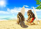 Funny chipmunks serfers on the beach with surf boards poster