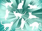 White cats silhouettes in different poses and attitudes poster