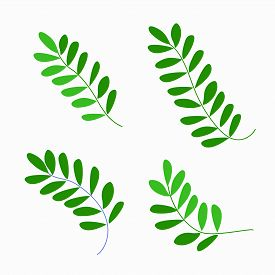 Cute Stylized Green Fern Leaves Set. Hand Drawn Simple Flat Leafy Plants For The Design Of Cards, Ic