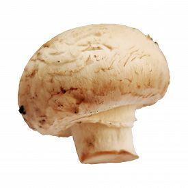 One Single Champignon Mushroom Isolated On White Background Macro Photo