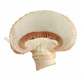 One Single Champignon Mushroom Slice Isolated On White Background Macro Photo