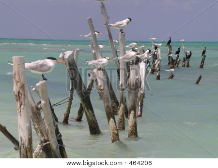 Birds On Drift Wood