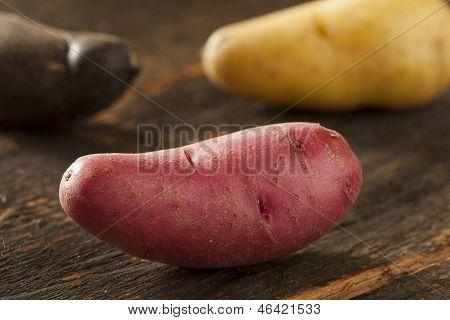 Raw Organic Fingerling Potato Medley