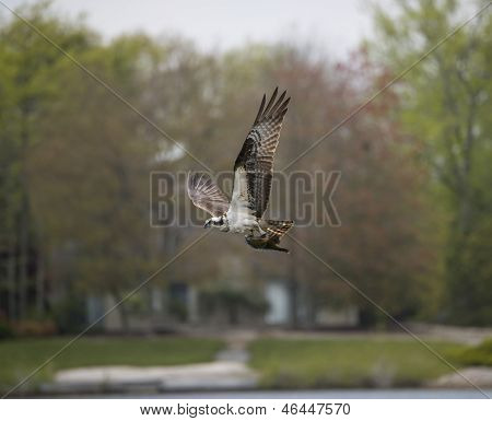 sea hawk catch