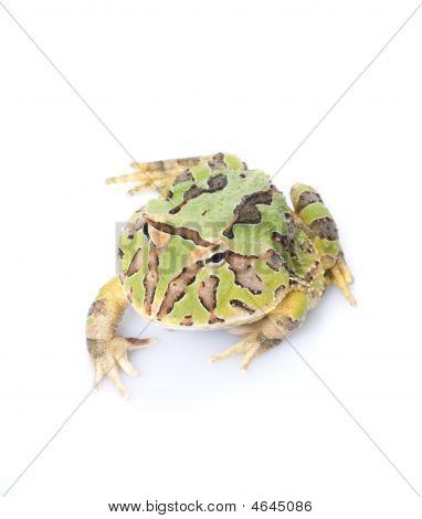 Fantasy Frog