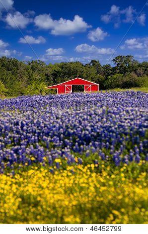 Red Barn In The Bluebonnet Field