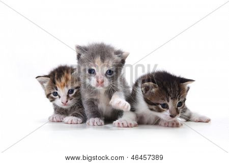 Three Adorable Newborn Kittens on a White Background