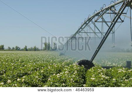 Idaho Potato Irrigation