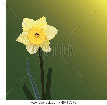 Daffodil.eps