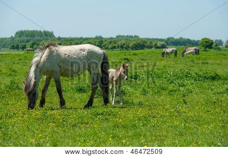 Foal and its mother in a sunny meadow poster