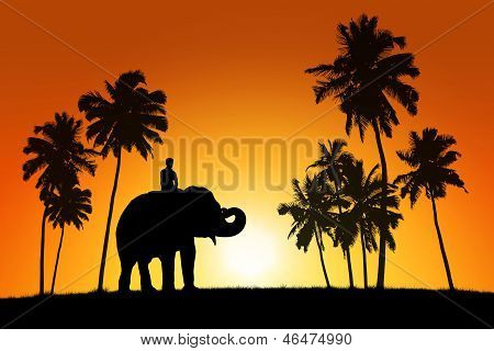 realistic black silhouette of asian elephant with the rider among coconut trees on tropical sunset background poster