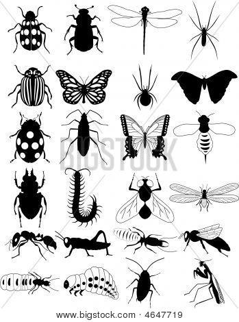 Bug silhouet