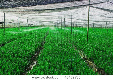 Green Vegetable Plot