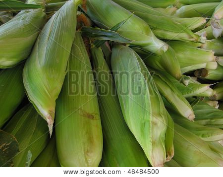 Summer Ears of Corn