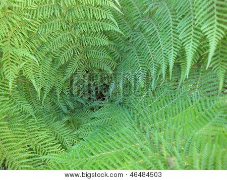 Tropical Fern Too