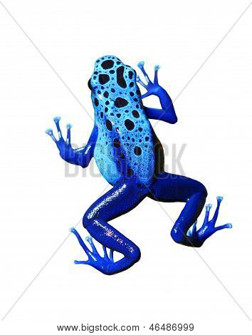 Colorful Blue Frog On White Background. Isolated