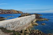 cliifs seagulls pier and cliffs and coastal view at St. Abbs in Berwickshire poster