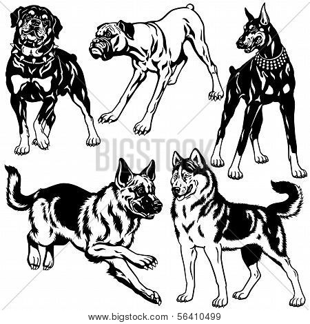 set with dog breeds black white