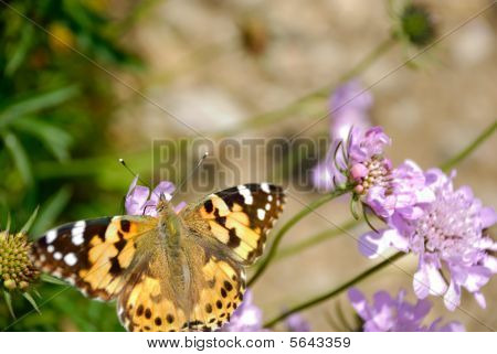 Butterfly Corner