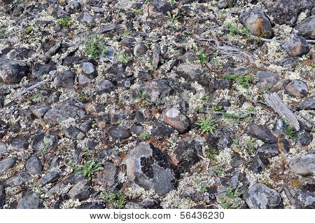 The Stony Soil.