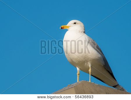 Seagull and Sunny Blue Sky at the Beach