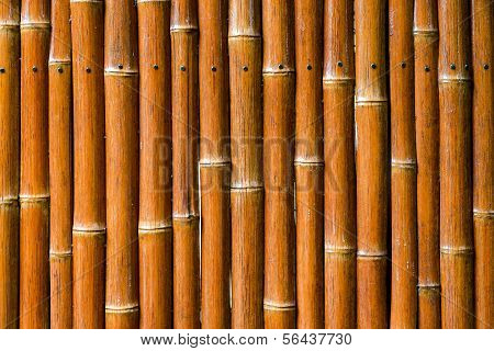 Bamboo Fencing Background Detail