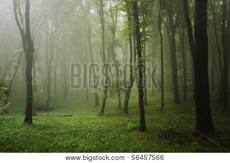 Green tropical rainforest with fog after rain
