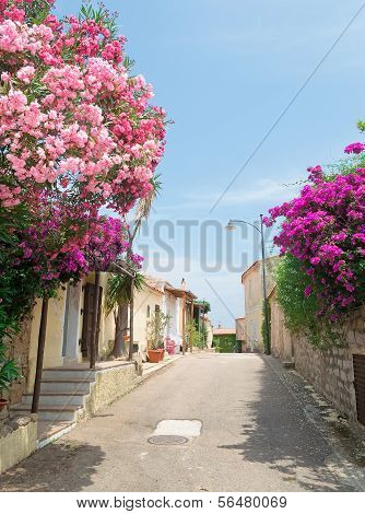 Flowers By The Street