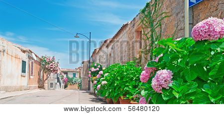 Pink Hydrangeas By The Street