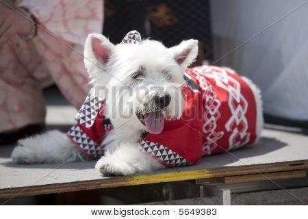 Nisei Week Dog