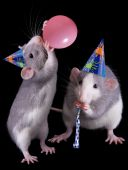 Two rat sisters are throwing a party-- one is blowing up a balloon. poster