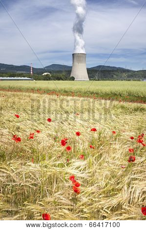 Corn Poppies And Nuclear Power Station