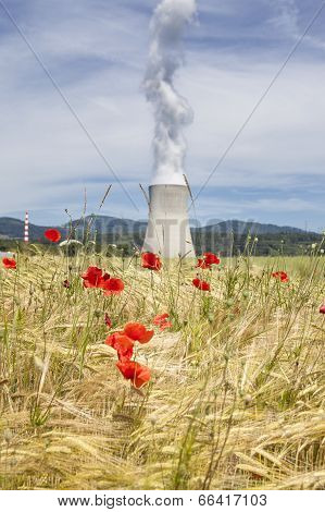 Corn Poppies And Cooling Tower