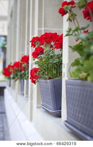 Red Flowers On The Window Board