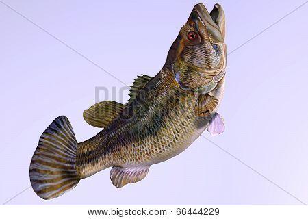 Largemouth Bass Side Profile