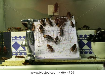 Cockroach infested kitchen