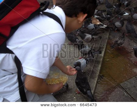 Child feeding pigeons