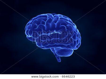 X- Ray Human Brain