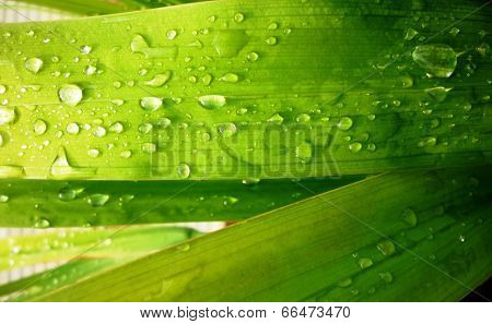 leaf with drops of water