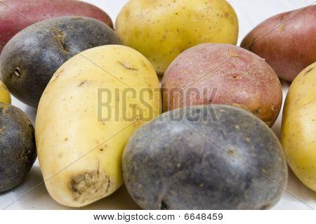 Close Up Of Petite Potato Variety