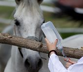 Young female veterinarian preparing injection for horse on farm poster