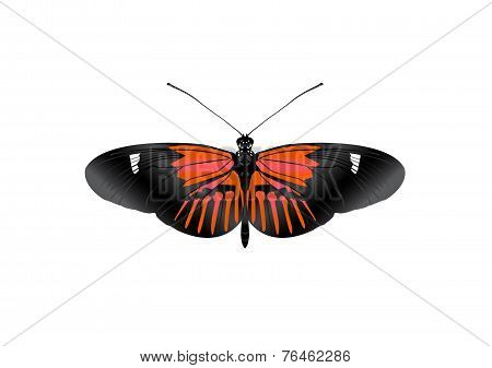 Red Butterfly_vector_