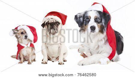 Three Dogs Christmas