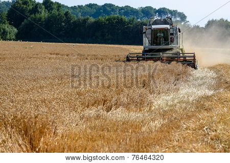 a cornfield with wheat at harvest. a combine harvester at work.